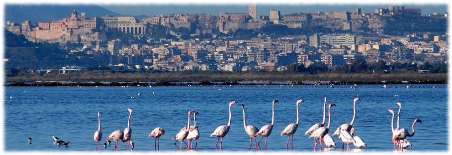 Cagliari_flamingos